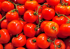 Pomodori rossi Fotografie Stock