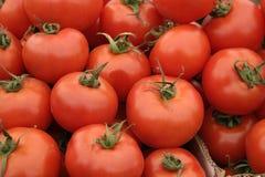 Pomodori rossi Immagine Stock Libera da Diritti