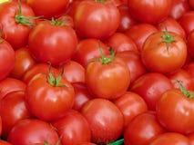 Pomodori rossi 2013 della st Jacobs Village Fotografia Stock