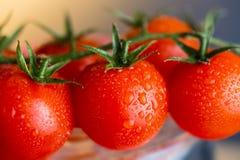 Pomodori rossi di gocciolamento Fotografia Stock