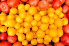 Pomodori rossi e dorati organici al mercato del ` degli agricoltori Immagine Stock