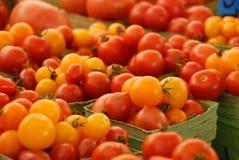 Pomodori rossi e gialli fotografia stock libera da diritti