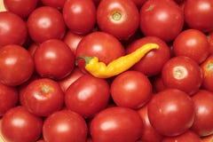 Pomodori rossi e pepe giallo, buon raccolto Fotografia Stock Libera da Diritti