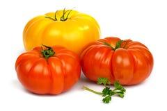 Pomodori rossi e yelloy maturi Fotografia Stock Libera da Diritti