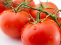 Pomodori rossi freschi immagini stock