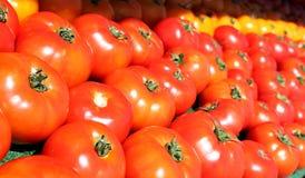 Pomodori rossi lucidi Fotografie Stock