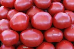 Pomodori rossi maturi Fotografie Stock Libere da Diritti