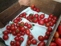 Pomodori rossi squisiti Fotografia Stock Libera da Diritti