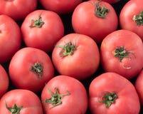 Pomodori rossi squisiti Un mucchio dei pomodori Azienda agricola di agricoltura del mercato del vassoio di estate in pieno dei po Fotografia Stock Libera da Diritti