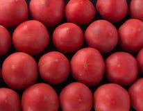 Pomodori rossi squisiti Un mucchio dei pomodori Azienda agricola di agricoltura del mercato del vassoio di estate in pieno dei po Immagini Stock
