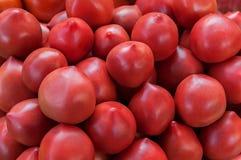 Pomodori rossi squisiti Un mucchio dei pomodori Azienda agricola di agricoltura del mercato del vassoio di estate in pieno dei po Fotografie Stock