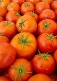 Pomodori rossi squisiti Un mucchio dei pomodori Azienda agricola di agricoltura del mercato del vassoio di estate in pieno dei po Immagine Stock