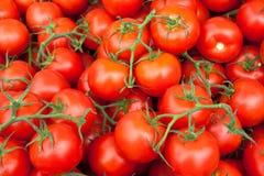 Pomodori, rosso, vite-maturato Immagine Stock Libera da Diritti