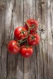 Pomodori rotondi lisci Fotografia Stock