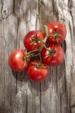 Pomodori rotondi lisci Immagini Stock Libere da Diritti