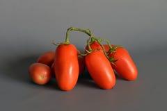 Pomodori San Marzano, campania, Italia Immagini Stock