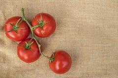 Pomodori sani maturi freschi della vite su un materiale della tela di iuta Fotografia Stock Libera da Diritti