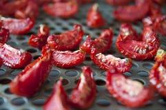 Pomodori seccati al sole Immagine Stock