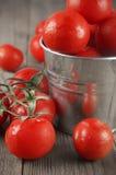 Pomodori in secchio Fotografia Stock