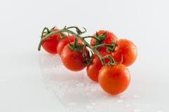 Pomodori su priorità bassa bianca Fotografia Stock