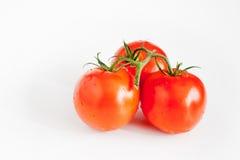 Pomodori su un fondo bianco Fotografie Stock Libere da Diritti