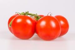 Pomodori su un ramo Immagini Stock
