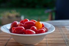 Pomodori su una tabella del giardino Fotografia Stock Libera da Diritti