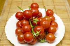 Pomodori su una zolla Fotografie Stock Libere da Diritti