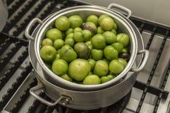 Pomodori succosi verdi fotografie stock libere da diritti