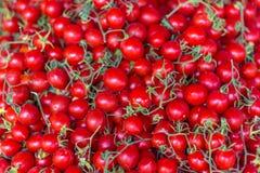 Pomodori sul banco nel mercato pubblico Immagine Stock Libera da Diritti
