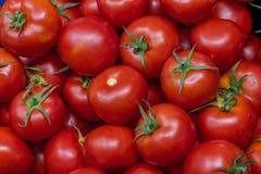 Pomodori sul banco nel mercato pubblico Immagini Stock Libere da Diritti