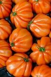 Pomodori sul contatore Fotografie Stock Libere da Diritti