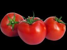 Pomodori sul nero Fotografie Stock