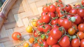 Pomodori sul vassoio del rattan immagine stock libera da diritti