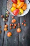 Pomodori sulla vecchia tavola di legno Pomodori variopinti Immagini Stock
