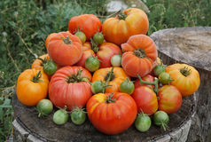 Pomodori variopinti Fotografia Stock