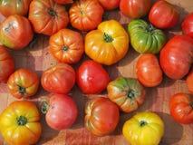 Pomodori variopinti immagine stock libera da diritti