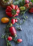 Pomodori variopinti e freschi di varietà, su un ramo con le foglie su un fondo scuro, primo piano fotografia stock libera da diritti