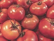 Pomodori verdure Alimento sano di estate Pomodori freschi Pomodori rossi Pomodori organici del mercato del villaggio Fotografia Stock