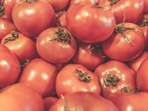 Pomodori verdure Alimento sano di estate Pomodori freschi Pomodori rossi Pomodori organici del mercato del villaggio Fotografie Stock Libere da Diritti