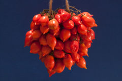Pomodorino del Piennolo del Vesuvio - tomat royaltyfri fotografi