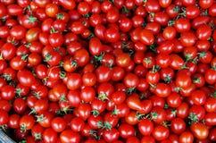 Pomodoro Fotografia Stock