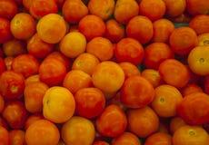 Pomodoro arancione Immagini Stock Libere da Diritti