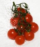 Pomodoro bagnato Fotografie Stock