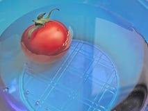 Pomodoro blu Immagini Stock