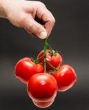 Pomodoro che tiene a mano Fotografia Stock Libera da Diritti