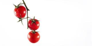 Pomodoro ciliegia Fotografia Stock
