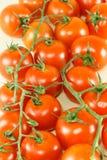 Pomodoro ciliegia fresco Fotografia Stock Libera da Diritti