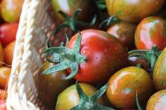 Pomodoro ciliegia rosso fresco e bagnato in giardino Immagine Stock