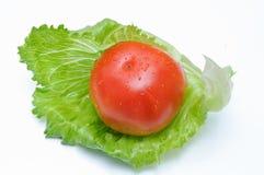 Pomodoro con lattuga immagine stock
